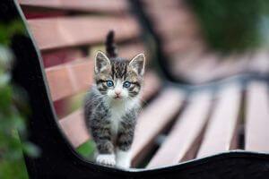 We're Feline Friendly!