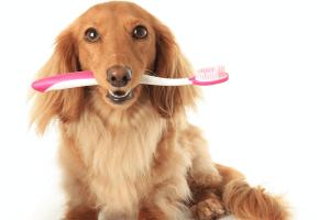Pet Periodontal Disease: Signs and Symptoms